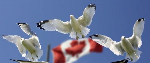 Polyas Goes Canada