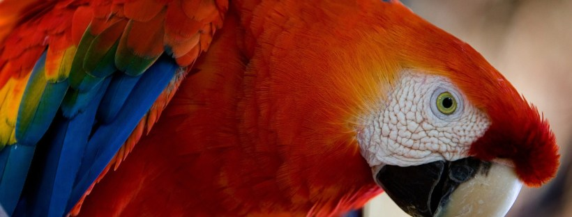 Parroting accents may not be the best way to fluency