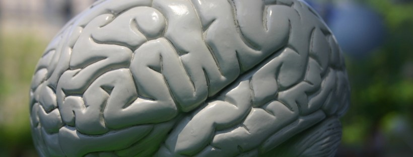 A plastic brain. Image from freeimages.com