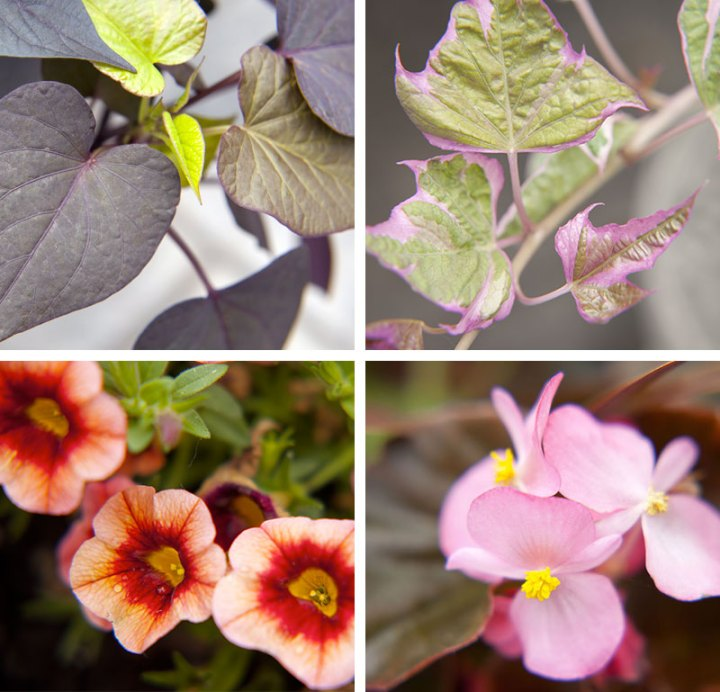 Flowers-DIY-Potted-Plants-POLYWOOD