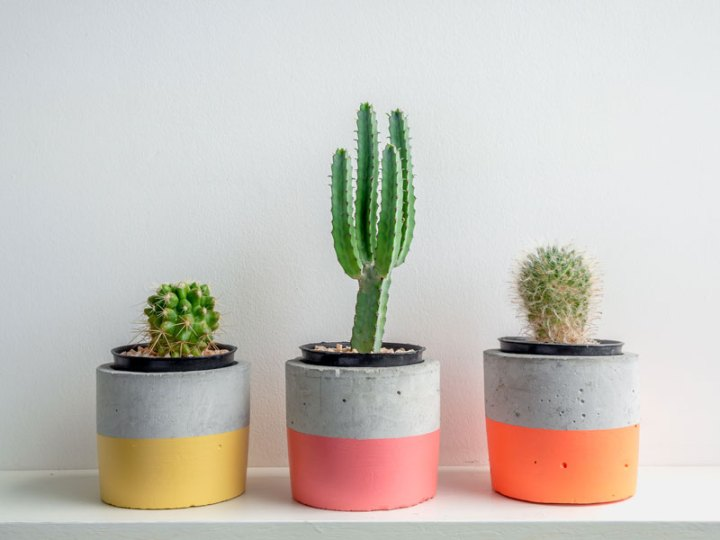 Three Cactus Planters