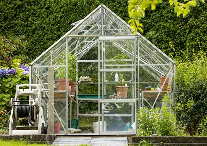 Backyard greenhouse in garden with plants inside