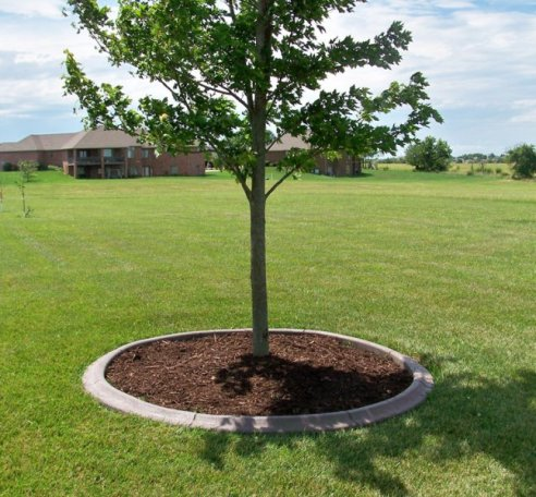 Cement Border Around Tree