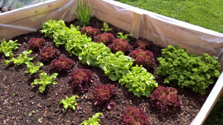Tips for Organic Raised Bed Gardens | POLYWOOD Blog
