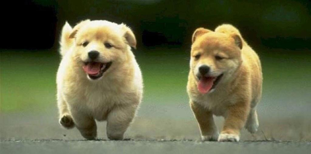 Risultati immagini per cane che si diverte