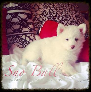 Sno Ball