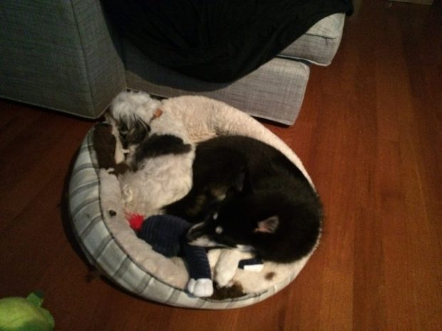 Alexander Hamilton cuddles cousin Winston