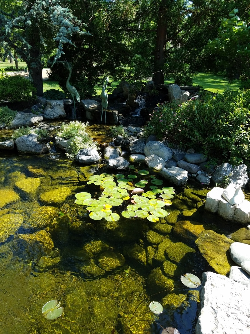 Farm Control Pond Algae
