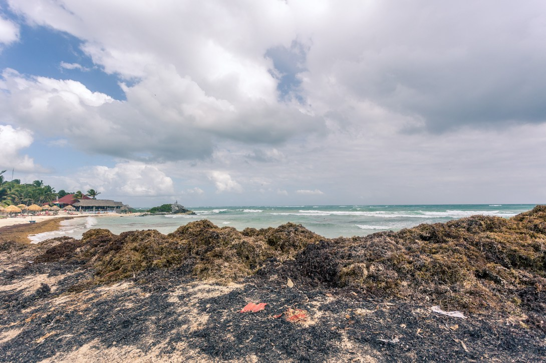 tulum_beach_seaweed_huge