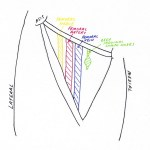 Lower Limb Anatomy: The Femoral Triangle