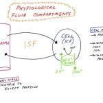 Basic Cellular Physiology: Fluid Compartments