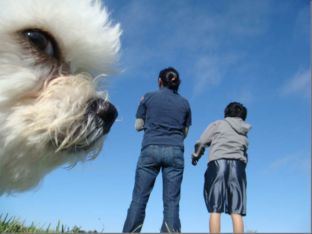 Photobombs Away: animal photobomb - side eye from a pooch