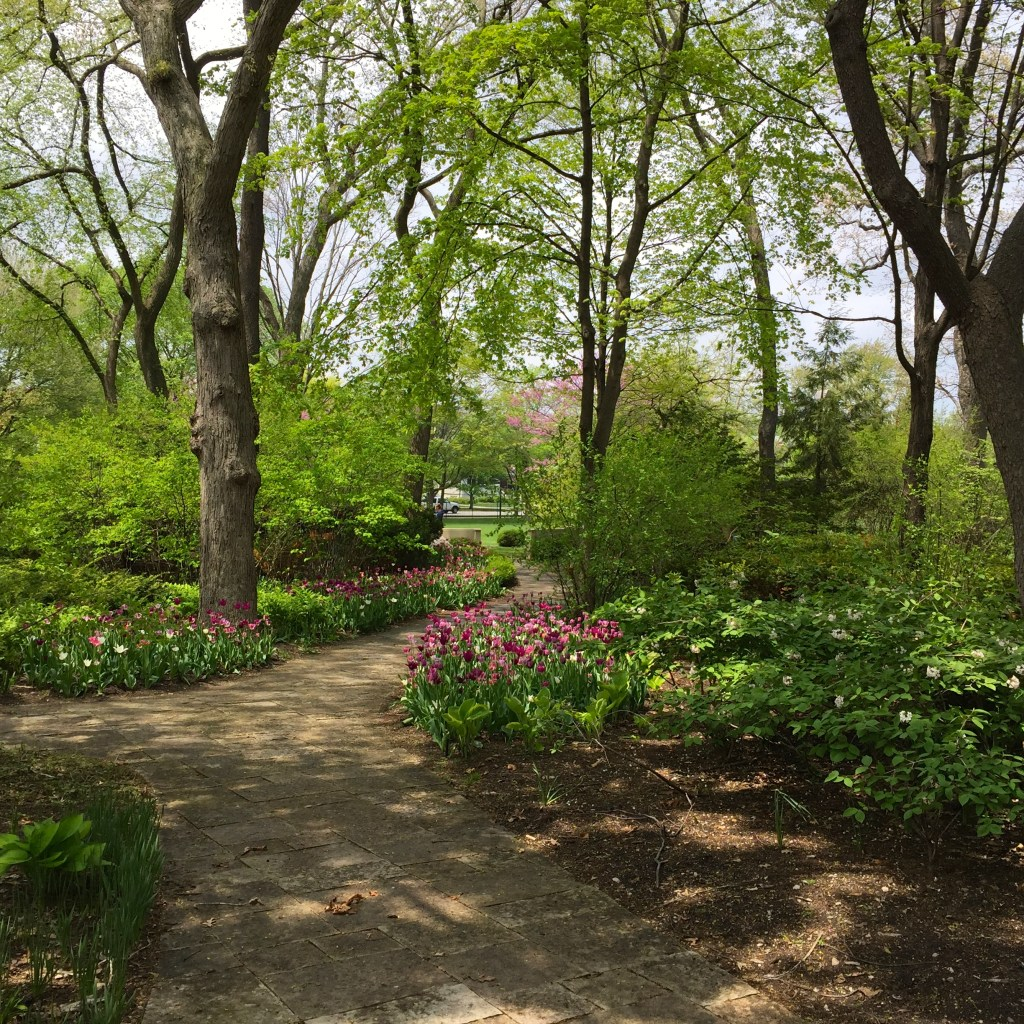 Northwestern University Bound: touring the campus - flowers along the path