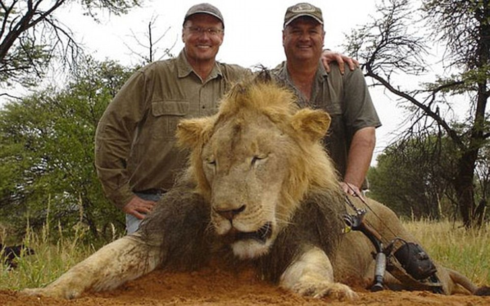 The Lion Hunter Becomes the Hunted: Giddy after the kill