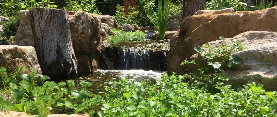 Marginal Pond Plants Depth