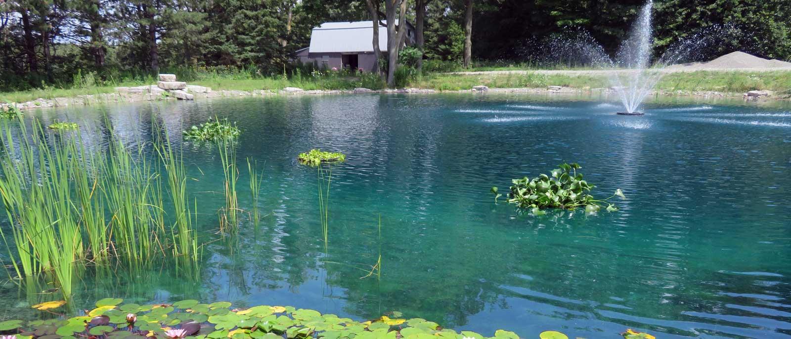 Floating Oxygenating Pond Plants