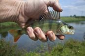 River fishing tips for beginners (1)