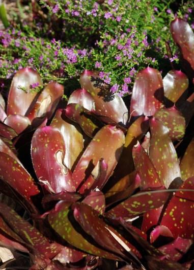 Bromeliad 2