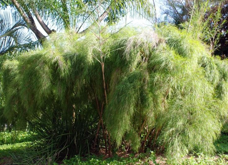 Fuzzy Tree