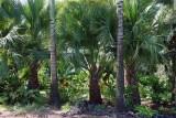 Palm Border 2