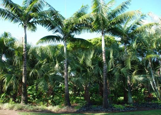 Palm Border 3