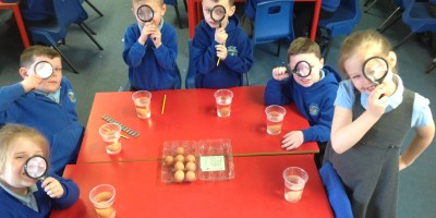 Investigating Eggs