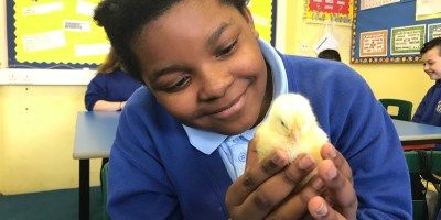 Chicks in Year 5! 🐥