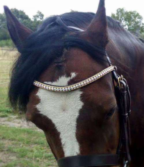 Welsh section C pony wearing bespoke, handmade crystal browband, looking competition ready. Difficult to fit pony head now finally has well fitting tack.