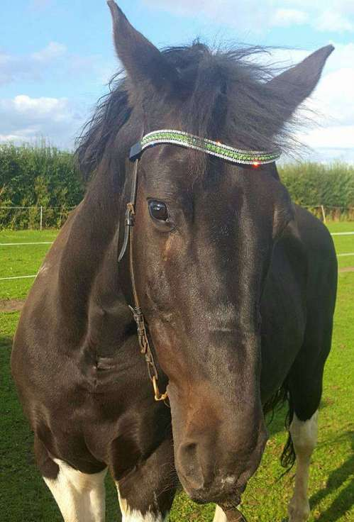 Lovely Tom in his stunning amazBling browband.