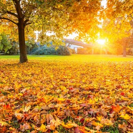 Tips for Moving in the Fall
