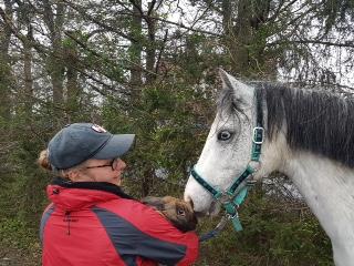 Pony mit Hasenmodell