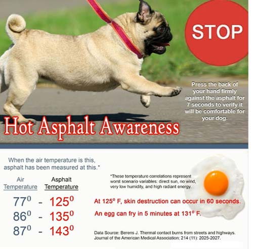 dogs hot asphalt chart