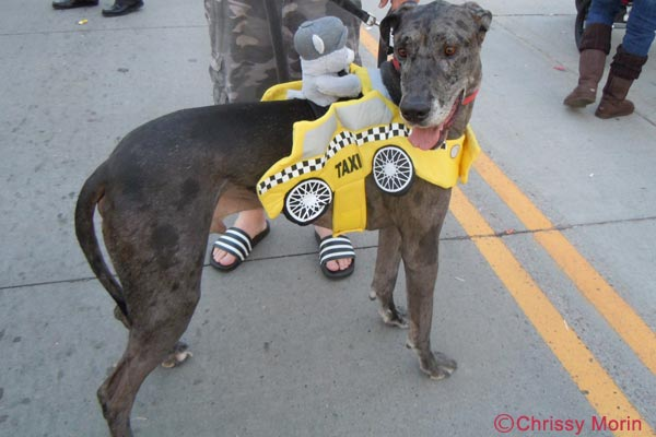 Great Dane Costume at Trick or Treat on Mainstreet Parker CO