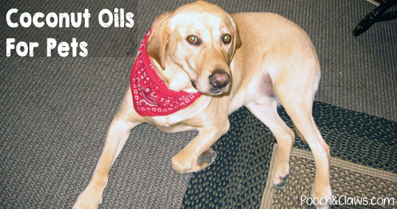coconut oil and your pets