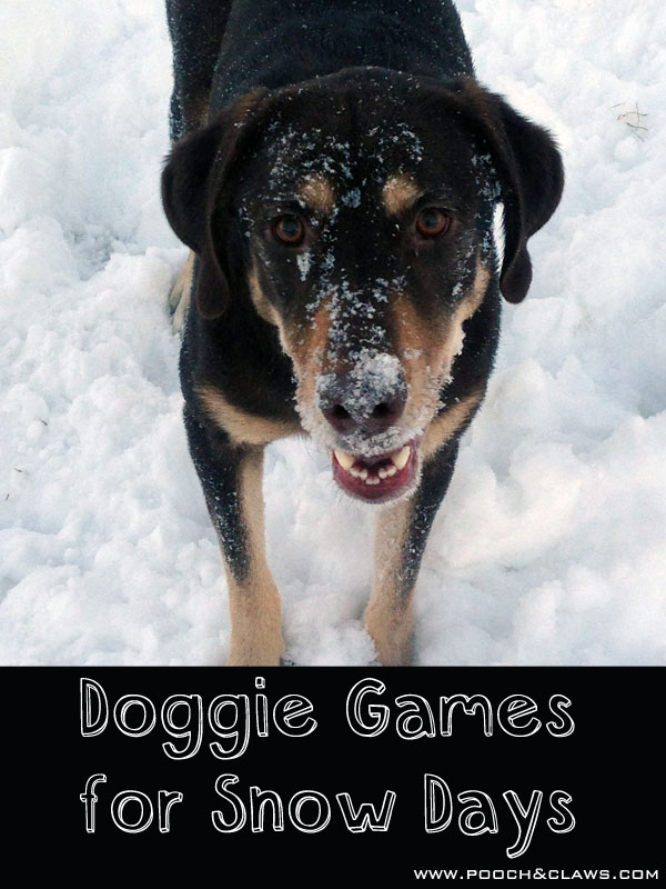 fun indoor games for dogs to play on snowy and cold days