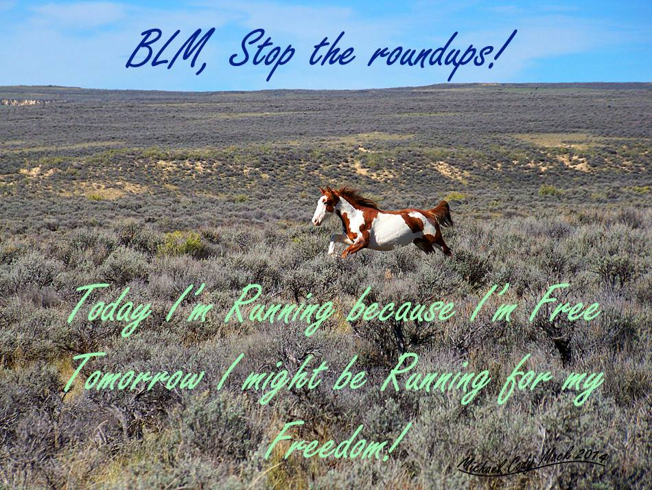 Canadian Wild Mustang Horses-  Wild Mustang Horses- Save And Protect Them Blog Post 2
