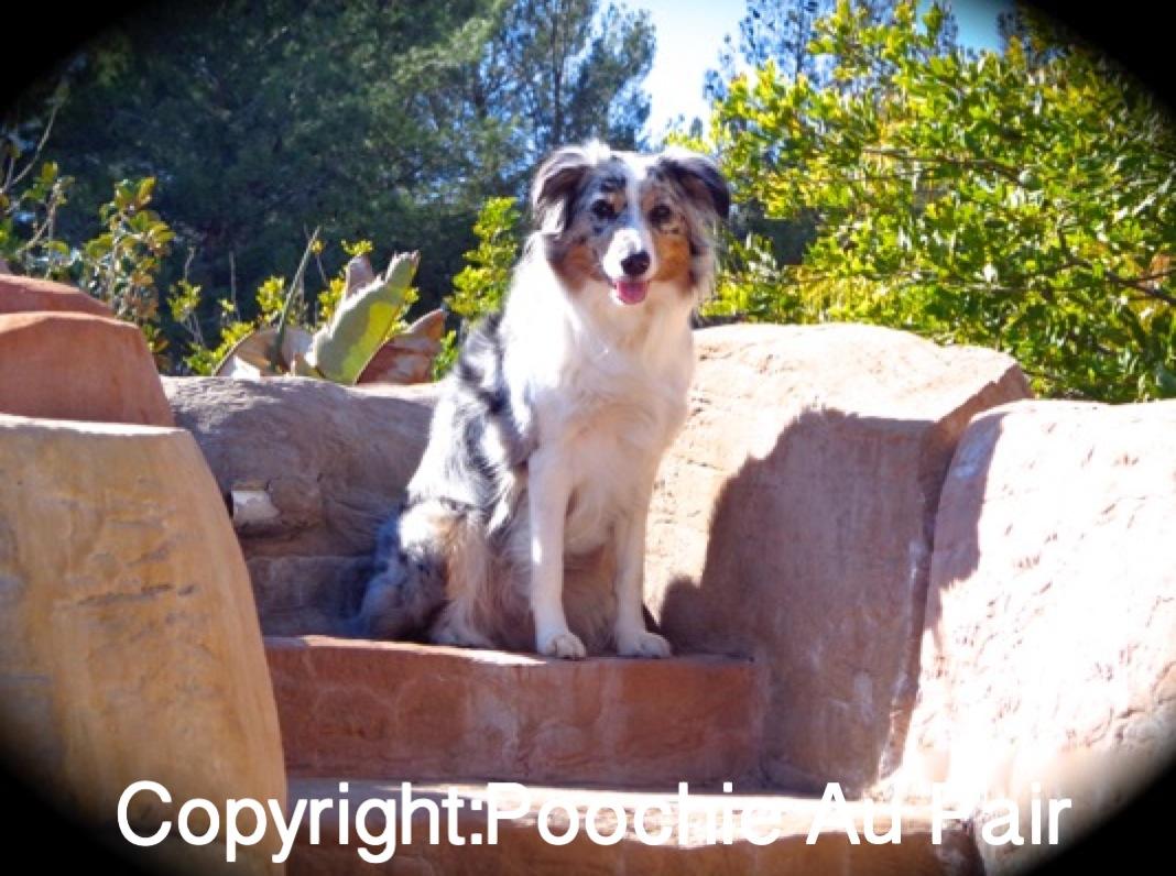 What Do Petsitters Do?- Blog Post 1