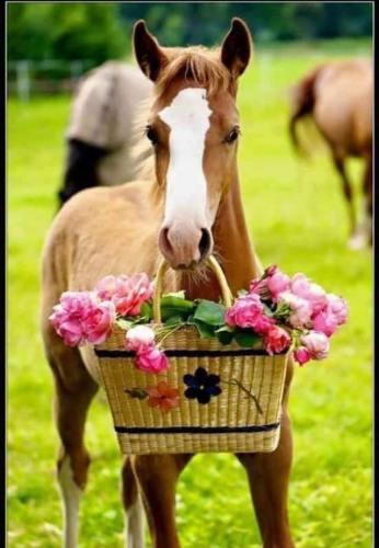 COLT HOLDING BASKET OF WILD PINK ROSES