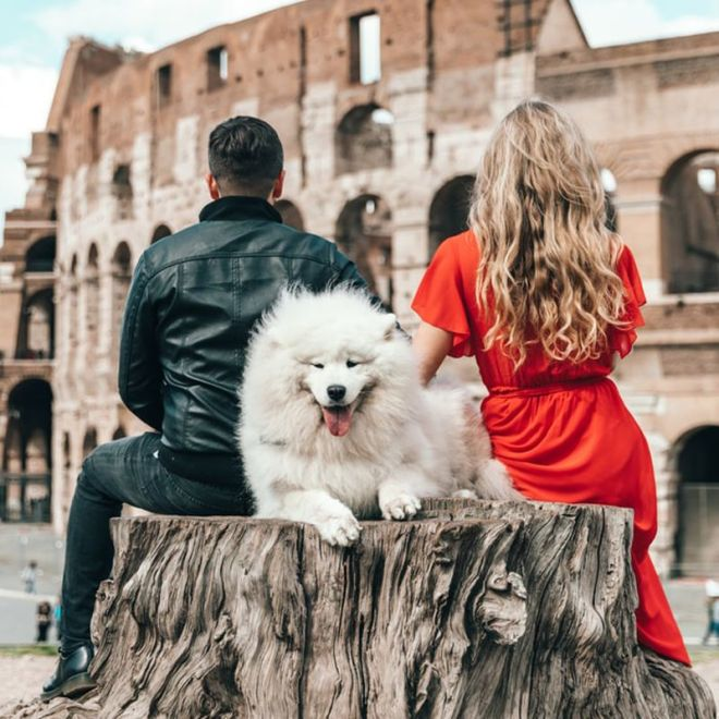 tips to travelling with your dog to europe