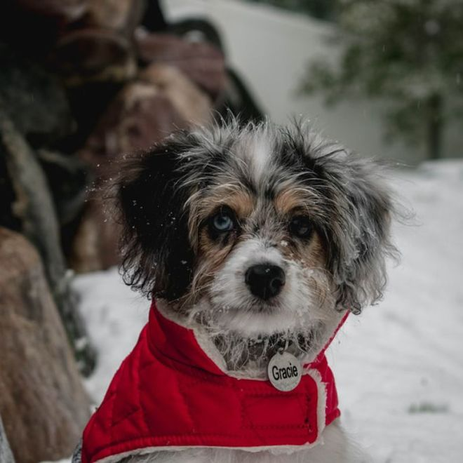 tips to keep your dog warm in winter