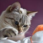 diy felt mousse toy for cats