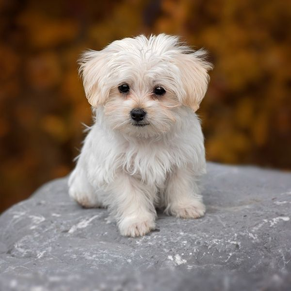 spanish dog names for your dog