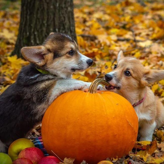 best Halloween spooky dog names