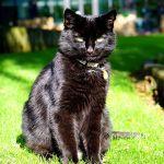 halloween black cat names