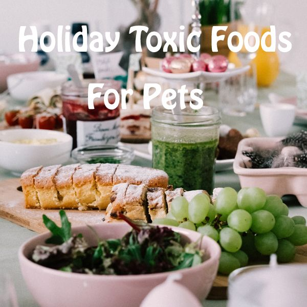 holiday foods toxic for pets