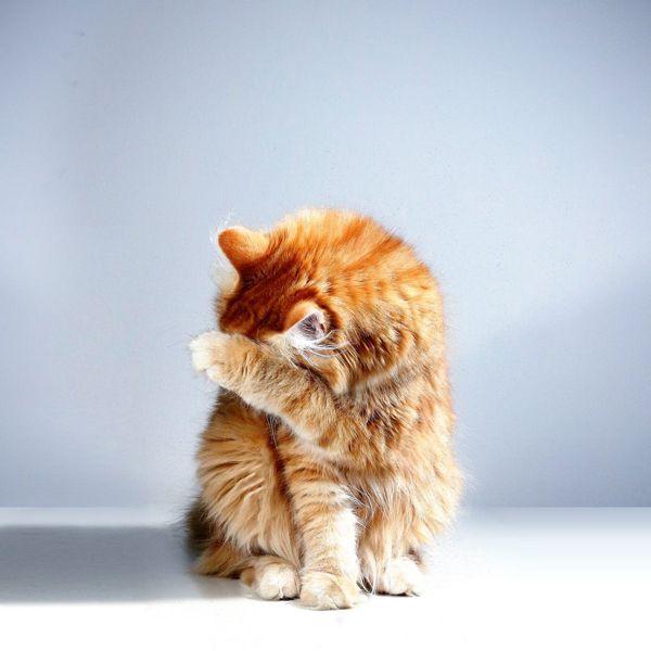 most common cat behavior problems