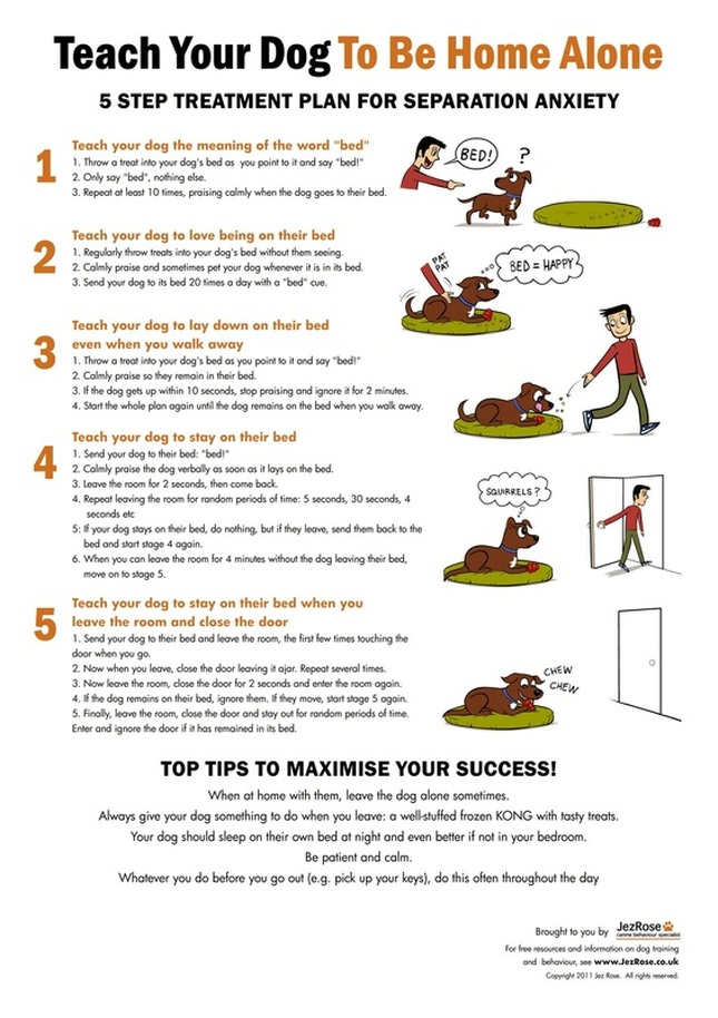 Top 5 Benefits of Puppy Separation Training
