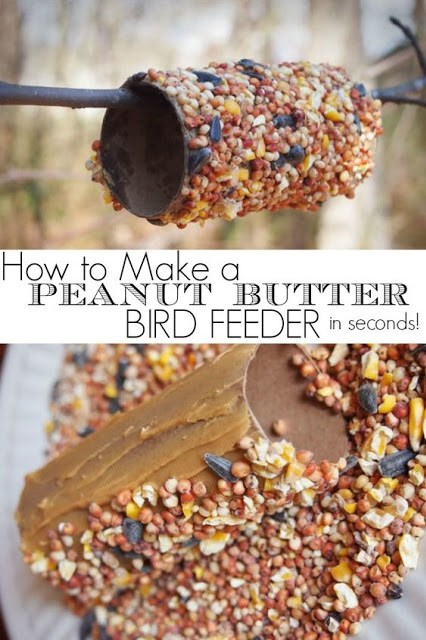 http://gogrowgo.com/how-to-make-peanut-butter-bird-feeder