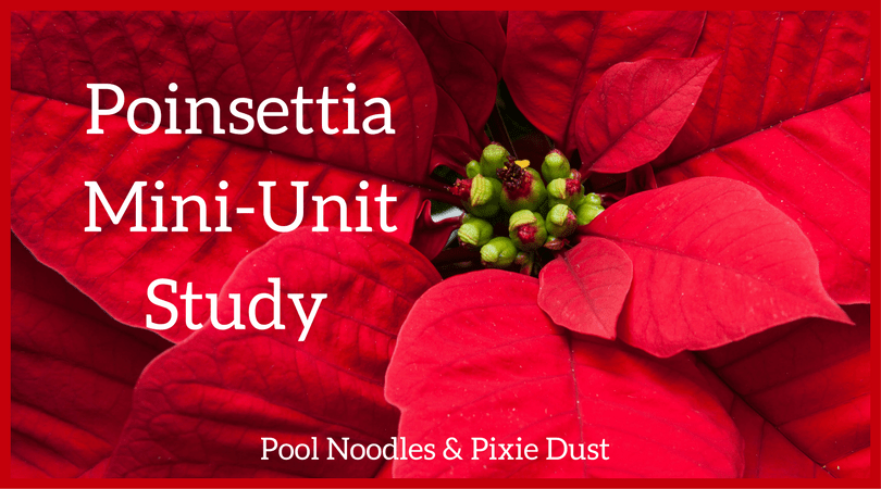 picture regarding The Legend of the Poinsettia Printable Story named Poinsettia Mini-System Investigation - Pool Noodles Pixie Grime