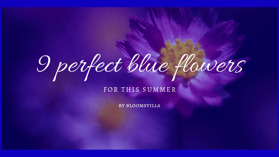 9 Perfect Blue Flowers for This Summer – Poonam Store